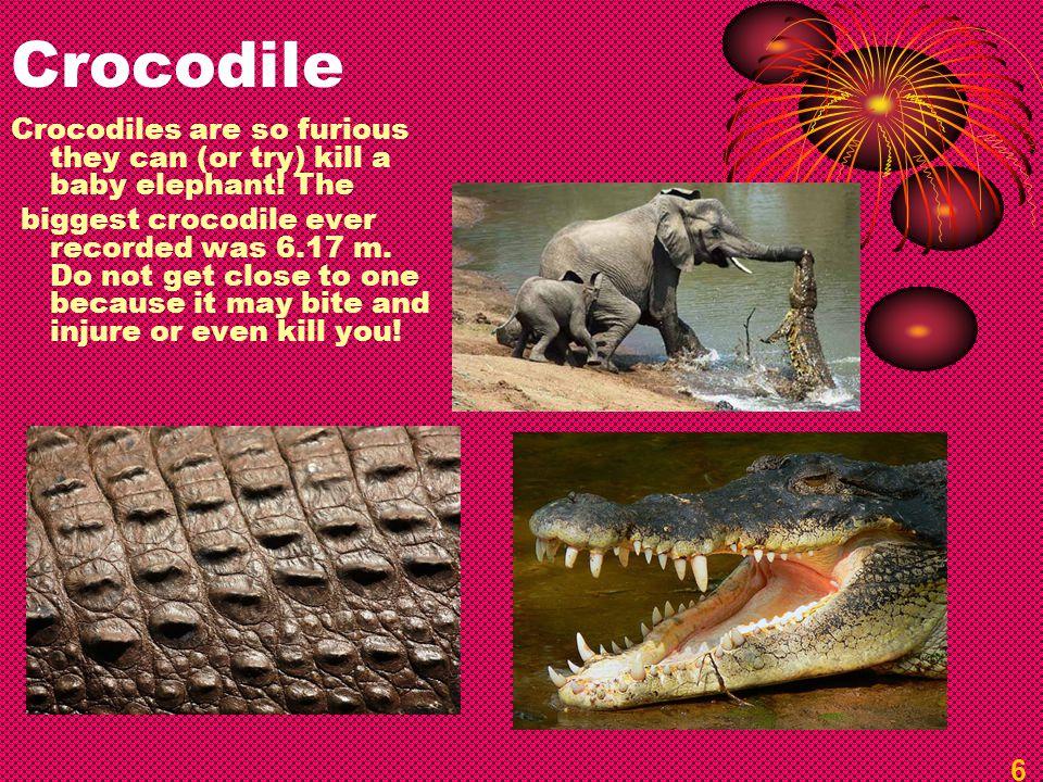 Crocodile Crocodiles are so furious they can (or try) kill a baby elephant.