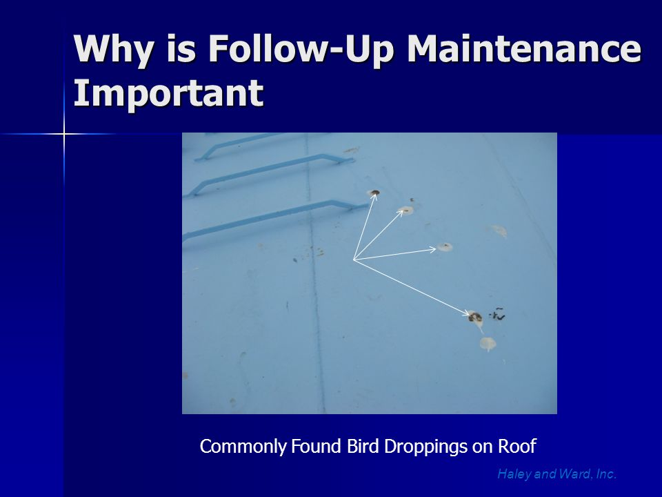 Why is Follow-Up Maintenance Important Haley and Ward, Inc. Commonly Found Bird Droppings on Roof