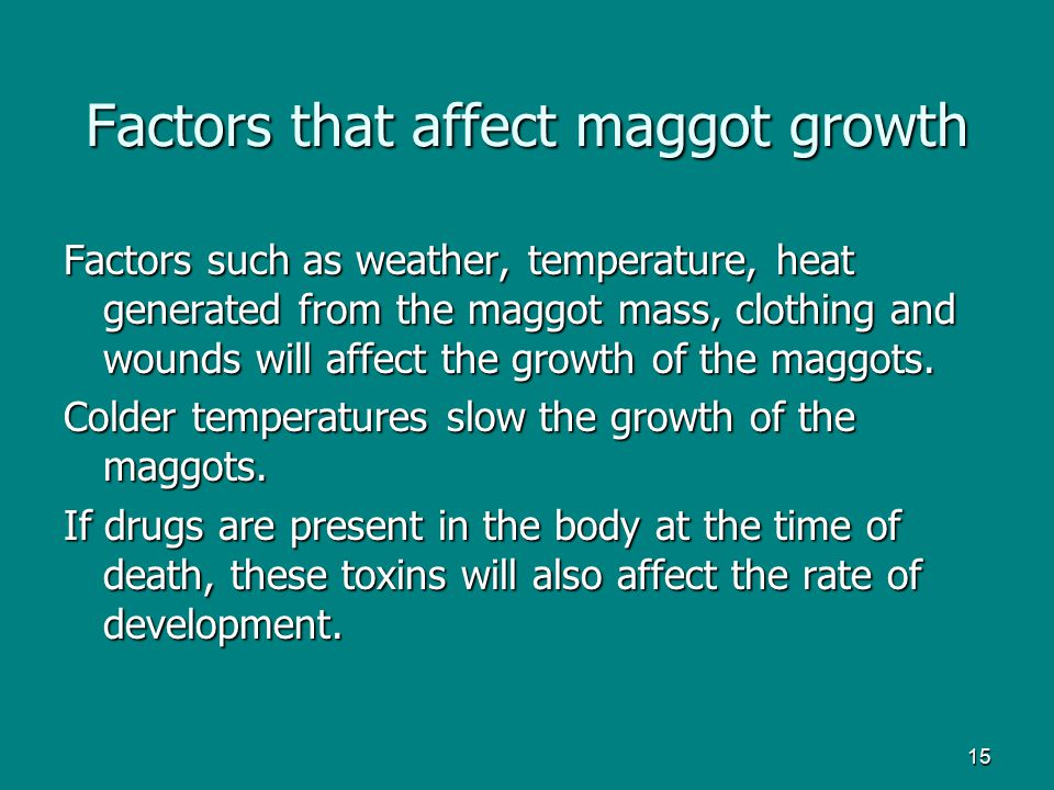 15 Factors that affect maggot growth Factors such as weather, temperature, heat generated from the maggot mass, clothing and wounds will affect the gr