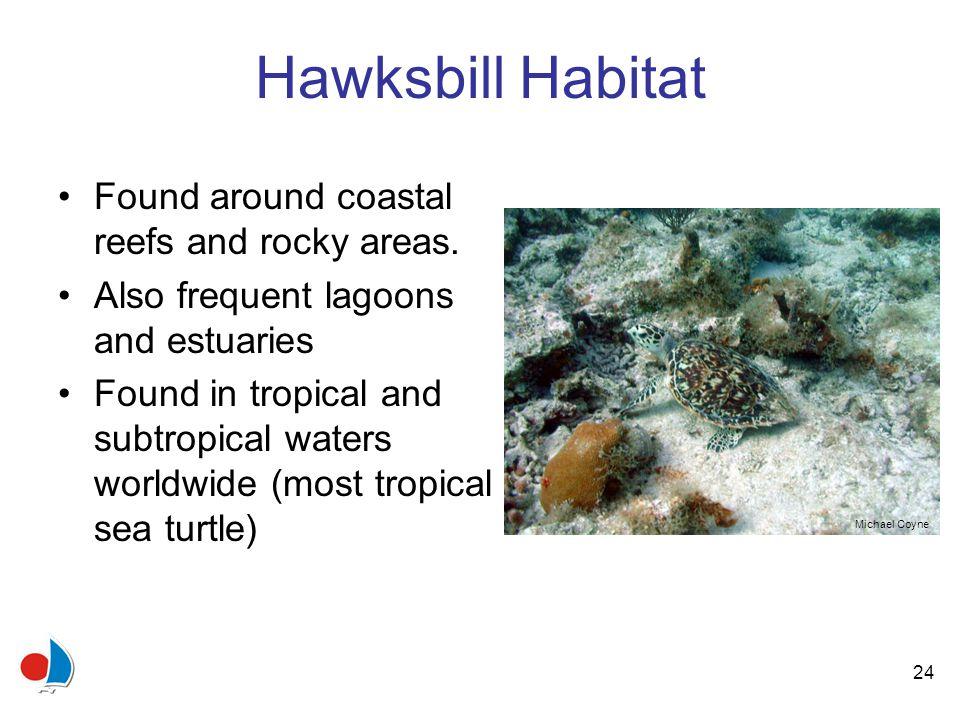 24 Hawksbill Habitat Found around coastal reefs and rocky areas.