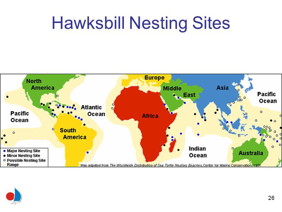 26 Hawksbill Nesting Sites
