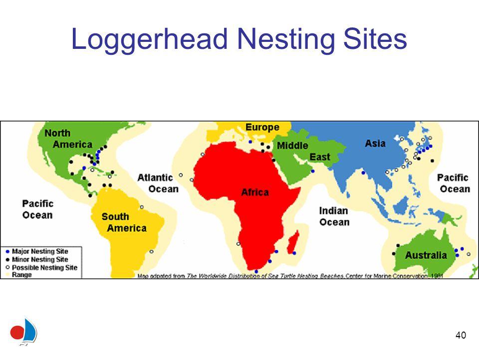 40 Loggerhead Nesting Sites