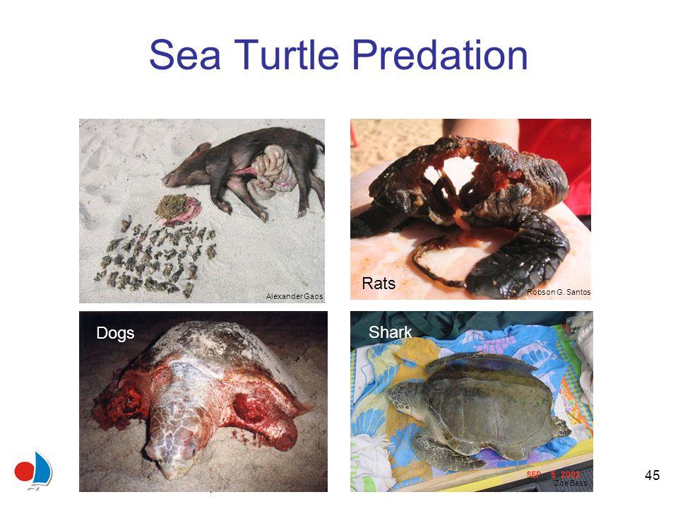 45 Sea Turtle Predation Alexander Gaos Alejandro Fallabrino Robson G.