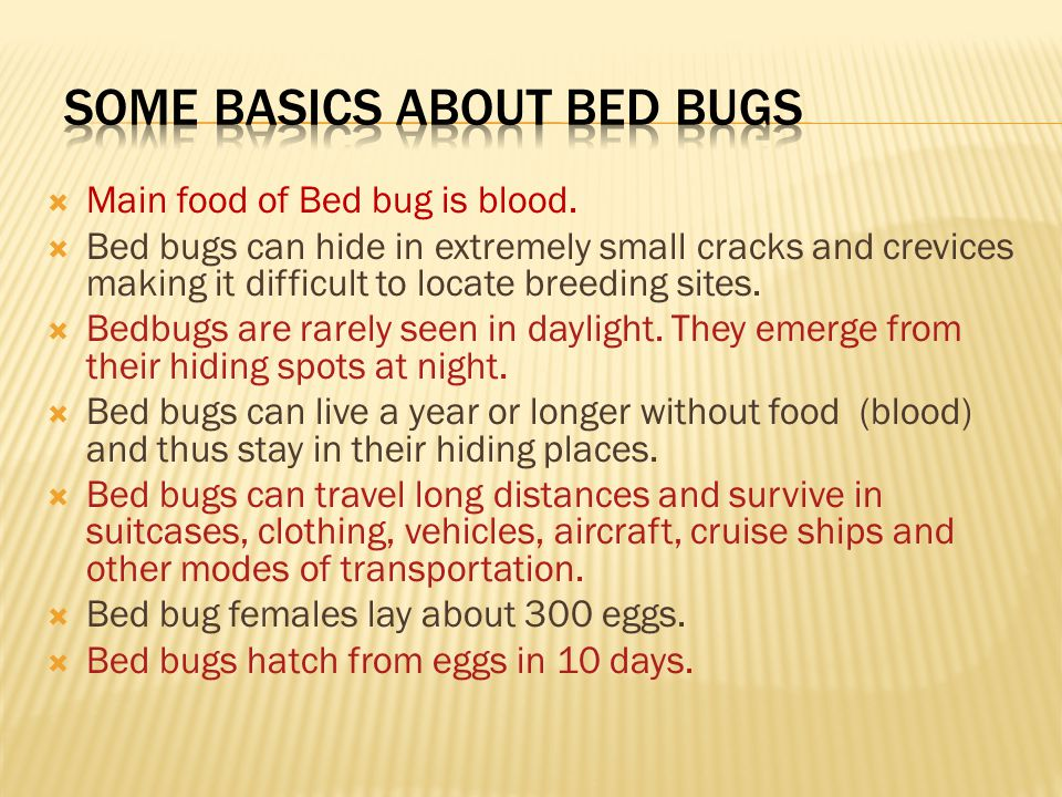  Main food of Bed bug is blood.