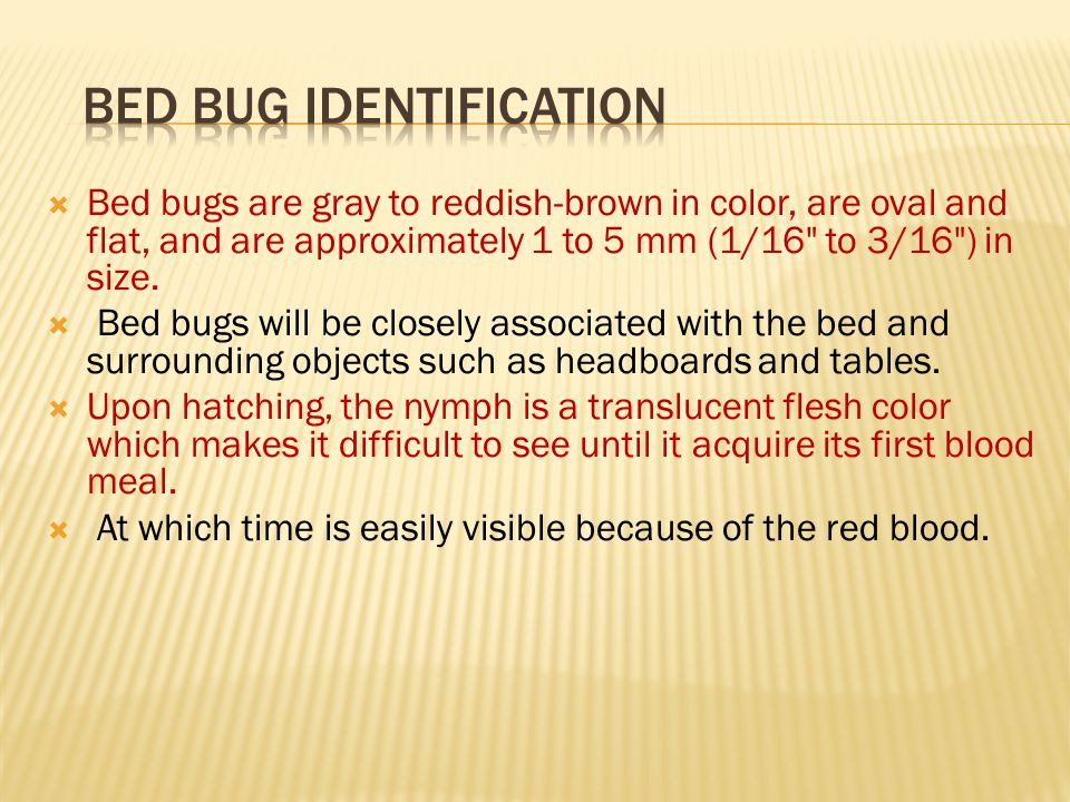  Bed bugs are gray to reddish-brown in color, are oval and flat, and are approximately 1 to 5 mm (1/16 to 3/16 ) in size.