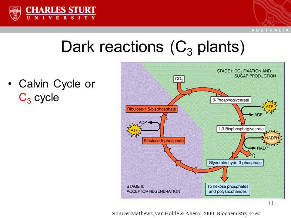 11 Dark reactions (C 3 plants) Calvin Cycle or C 3 cycle Source: Mathews, van Holde & Ahern, 2000, Biochemistry 3 rd ed