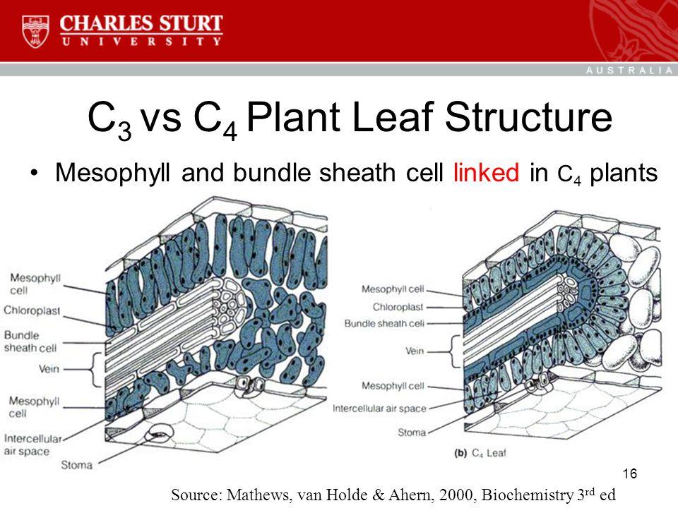 16 C 3 vs C 4 Plant Leaf Structure Source: Mathews, van Holde & Ahern, 2000, Biochemistry 3 rd ed Mesophyll and bundle sheath cell linked in C 4 plants
