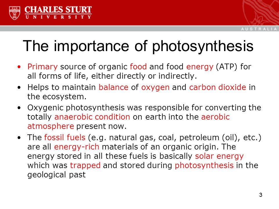 3 The importance of photosynthesis Primary source of organic food and food energy (ATP) for all forms of life, either directly or indirectly.
