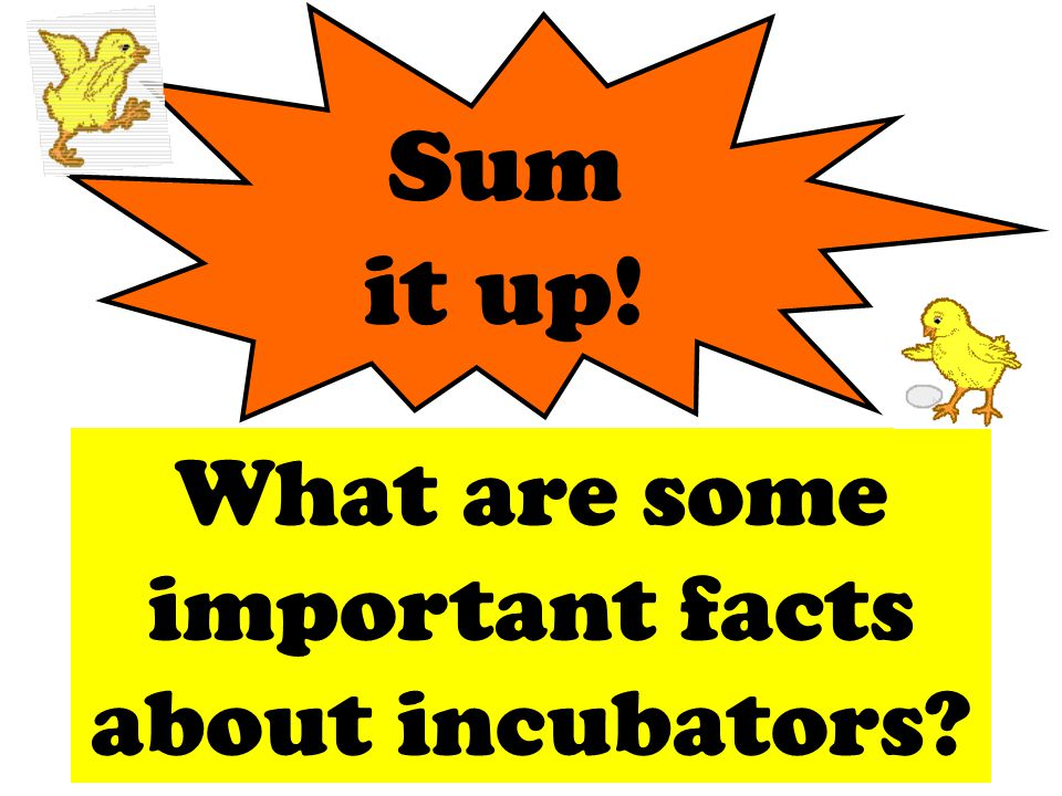 Sum it up! What are some important facts about incubators