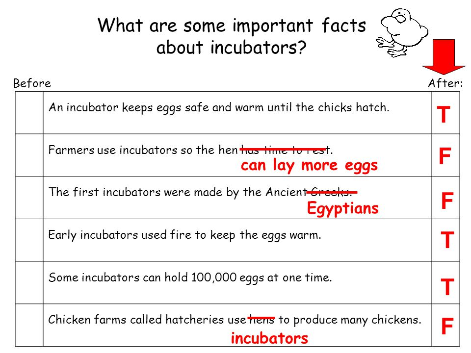 Before After: An incubator keeps eggs safe and warm until the chicks hatch.