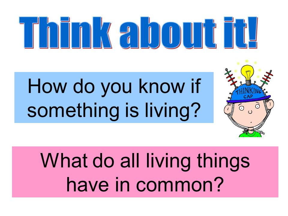 How do you know if something is living What do all living things have in common