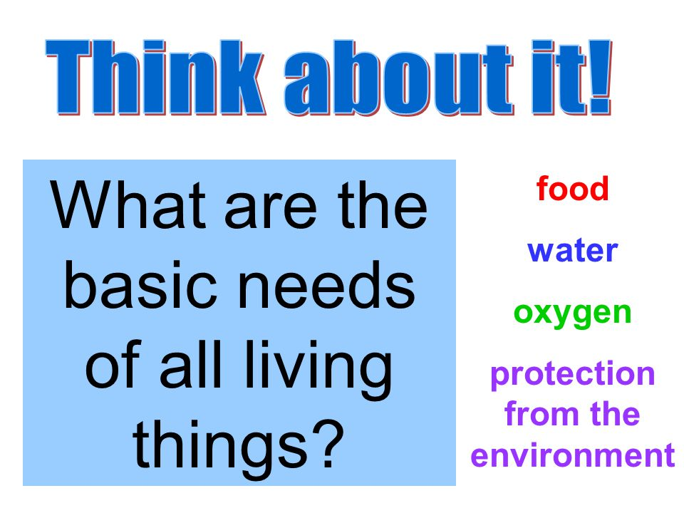 What are the basic needs of all living things food water oxygen protection from the environment