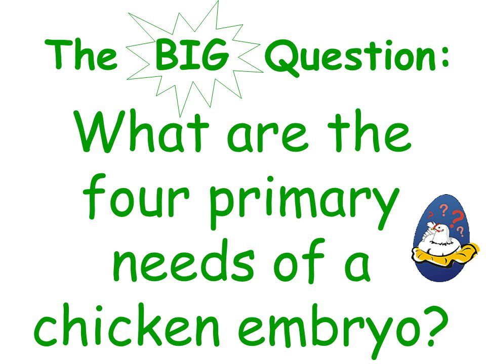 The BIG Question: What are the four primary needs of a chicken embryo