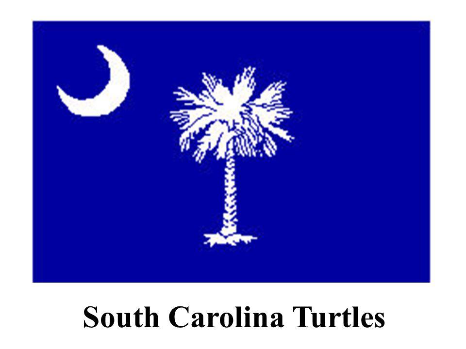 South Carolina Turtles