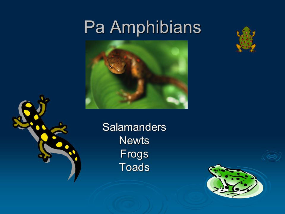 Pa Amphibians SalamandersNewtsFrogsToads