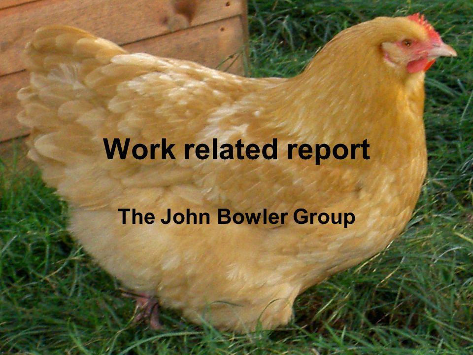 Work related report The John Bowler Group