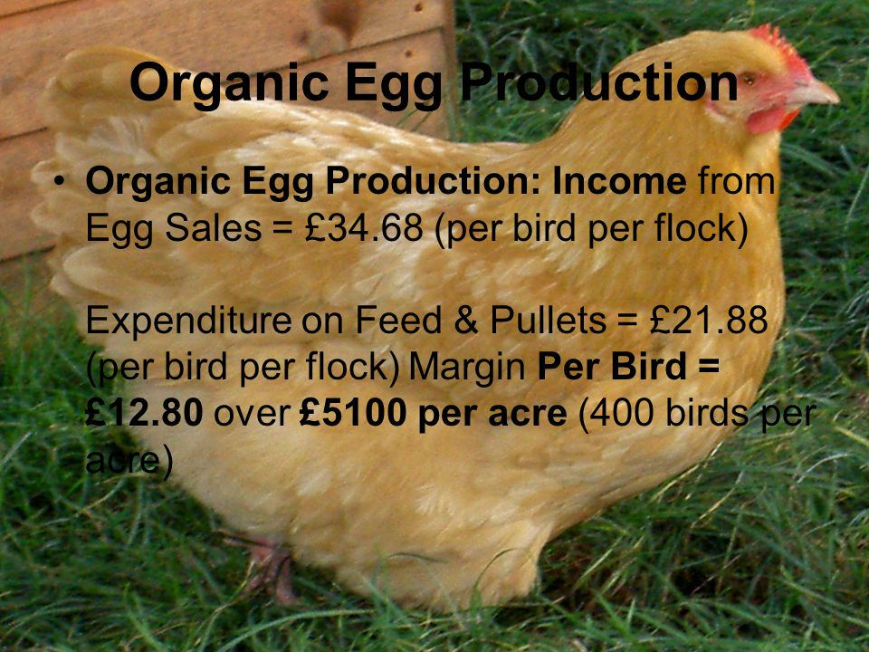 Organic Egg Production Organic Egg Production: Income from Egg Sales = £34.68 (per bird per flock) Expenditure on Feed & Pullets = £21.88 (per bird per flock) Margin Per Bird = £12.80 over £5100 per acre (400 birds per acre)