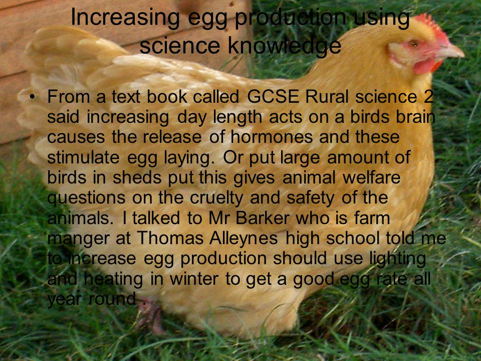 Increasing egg production using science knowledge From a text book called GCSE Rural science 2 said increasing day length acts on a birds brain causes the release of hormones and these stimulate egg laying.