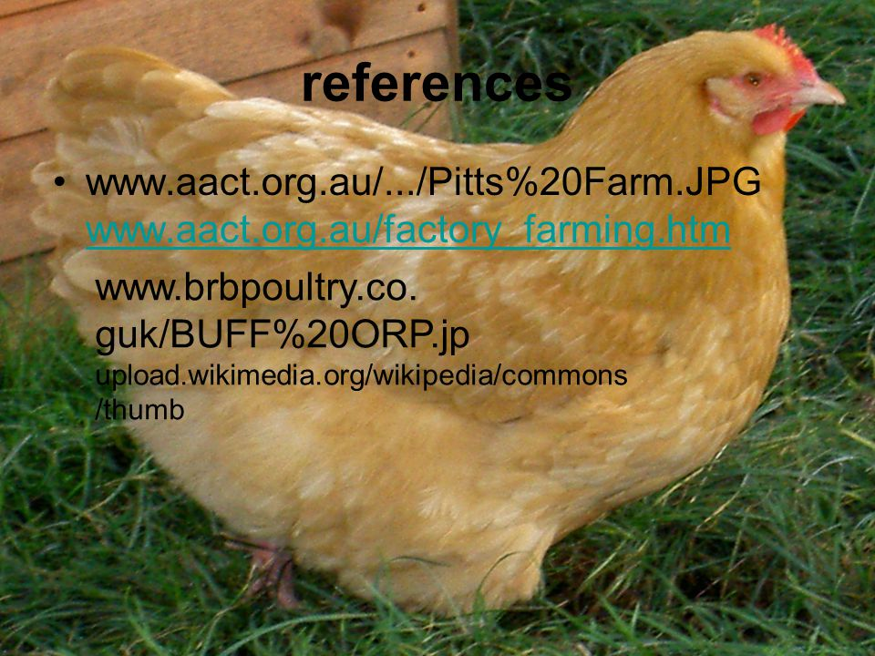 references www.aact.org.au/.../Pitts%20Farm.JPG www.aact.org.au/factory_farming.htm www.aact.org.au/factory_farming.htm www.brbpoultry.co.