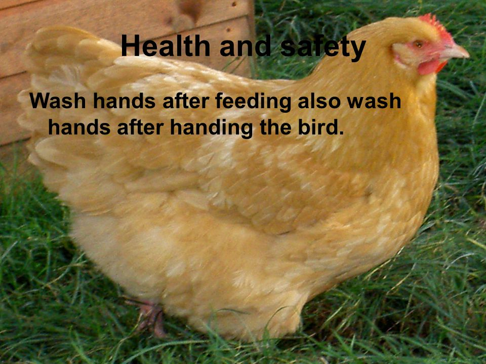 Health and safety Wash hands after feeding also wash hands after handing the bird.