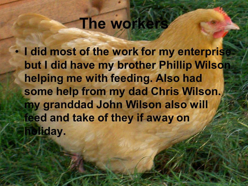 The workers I did most of the work for my enterprise but I did have my brother Phillip Wilson helping me with feeding.