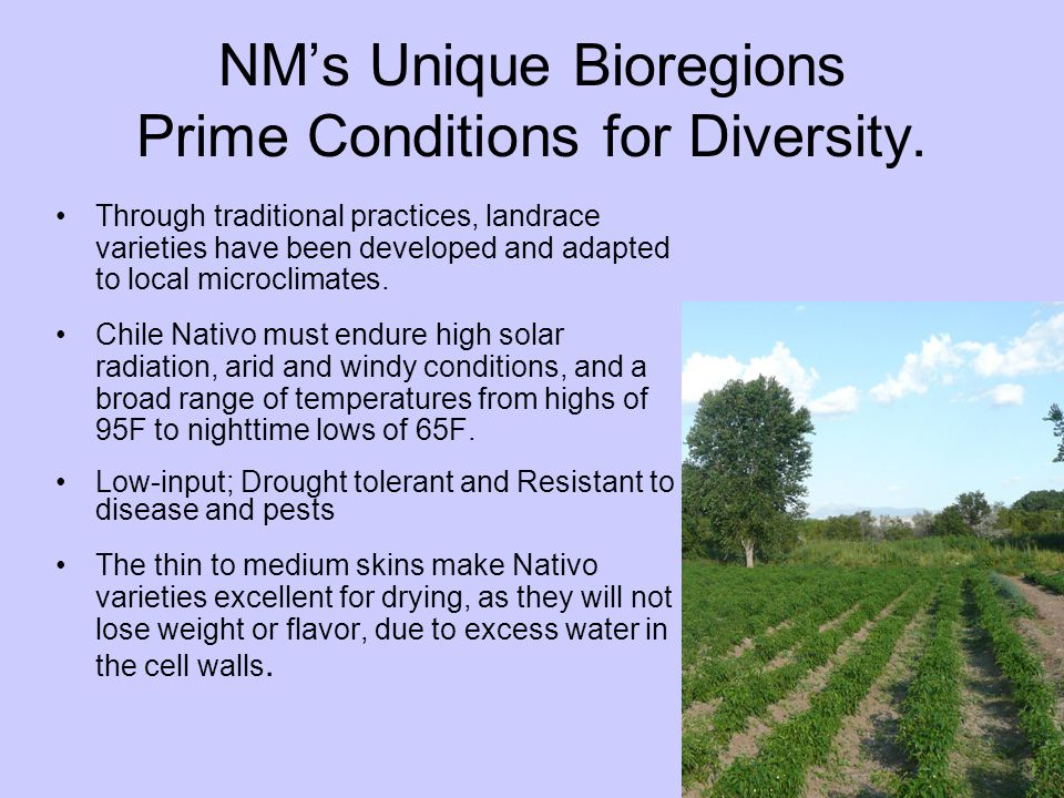 NM's Unique Bioregions Prime Conditions for Diversity.