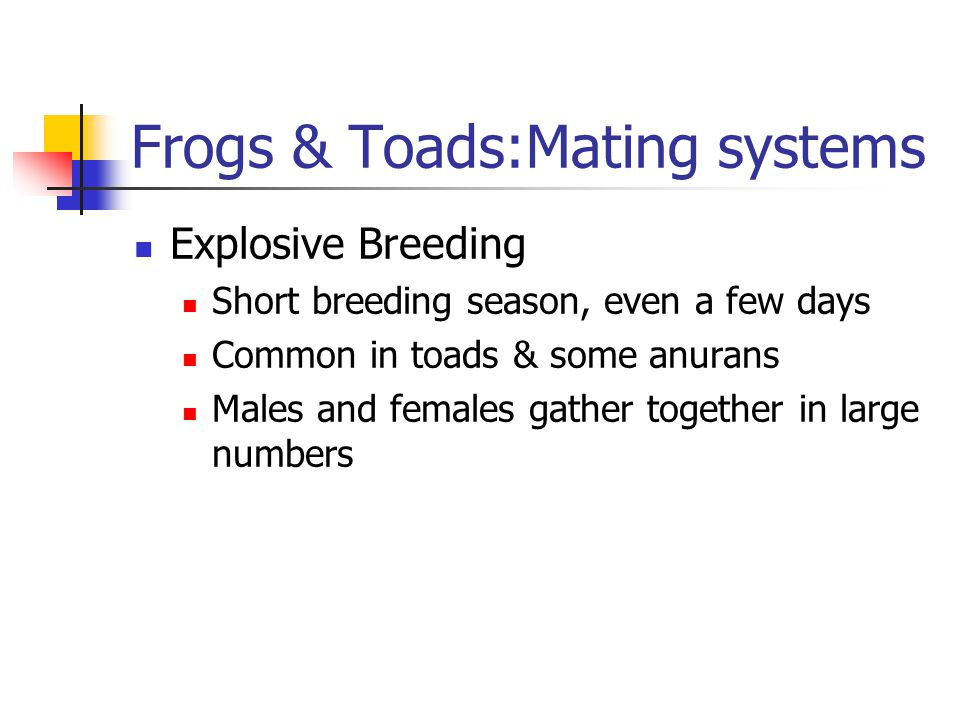 Frogs & Toads:Mating systems Explosive Breeding Short breeding season, even a few days Common in toads & some anurans Males and females gather together in large numbers