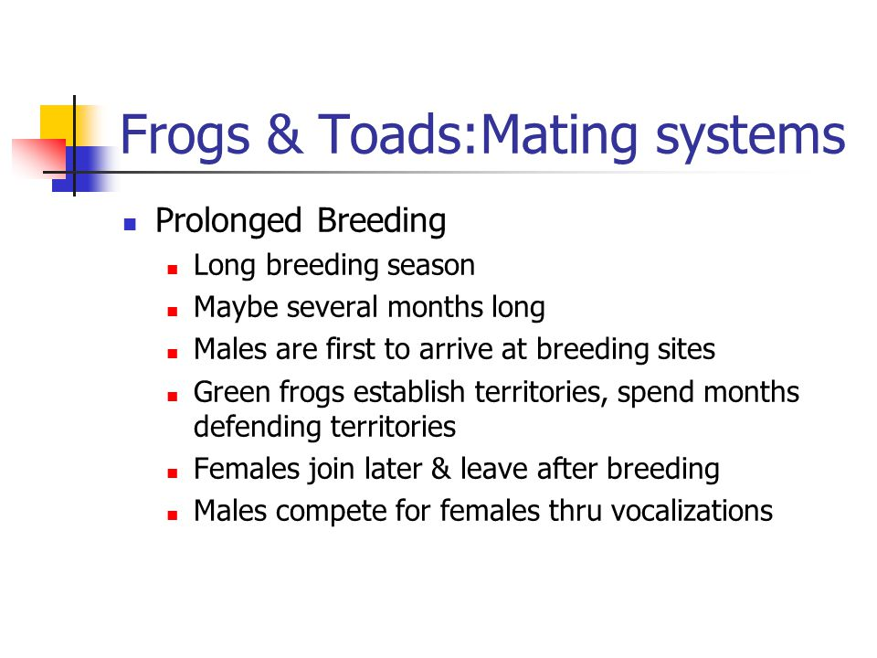 Frogs & Toads:Mating systems Prolonged Breeding Long breeding season Maybe several months long Males are first to arrive at breeding sites Green frogs establish territories, spend months defending territories Females join later & leave after breeding Males compete for females thru vocalizations