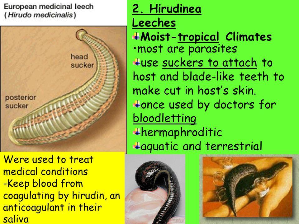 Classes of Annelida: 1- Oilgochaeta- Stream-lined bodies, few setaeStream-lined bodies, few setae Earthworms, Tubifex WormsEarthworms, Tubifex Worms