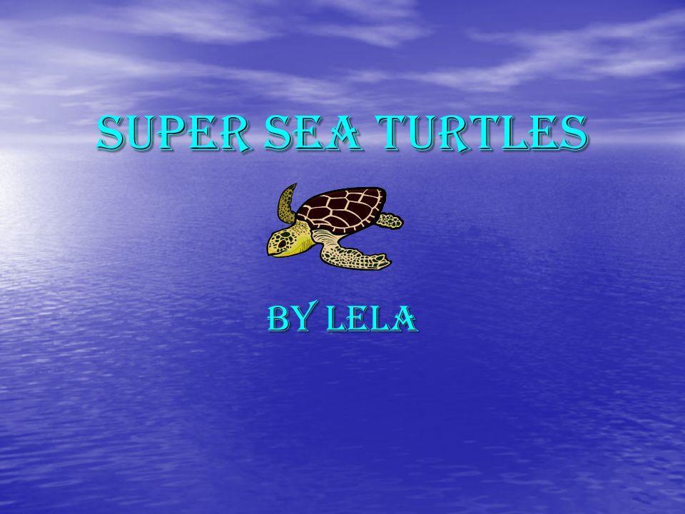 Super Sea Turtles By Lela