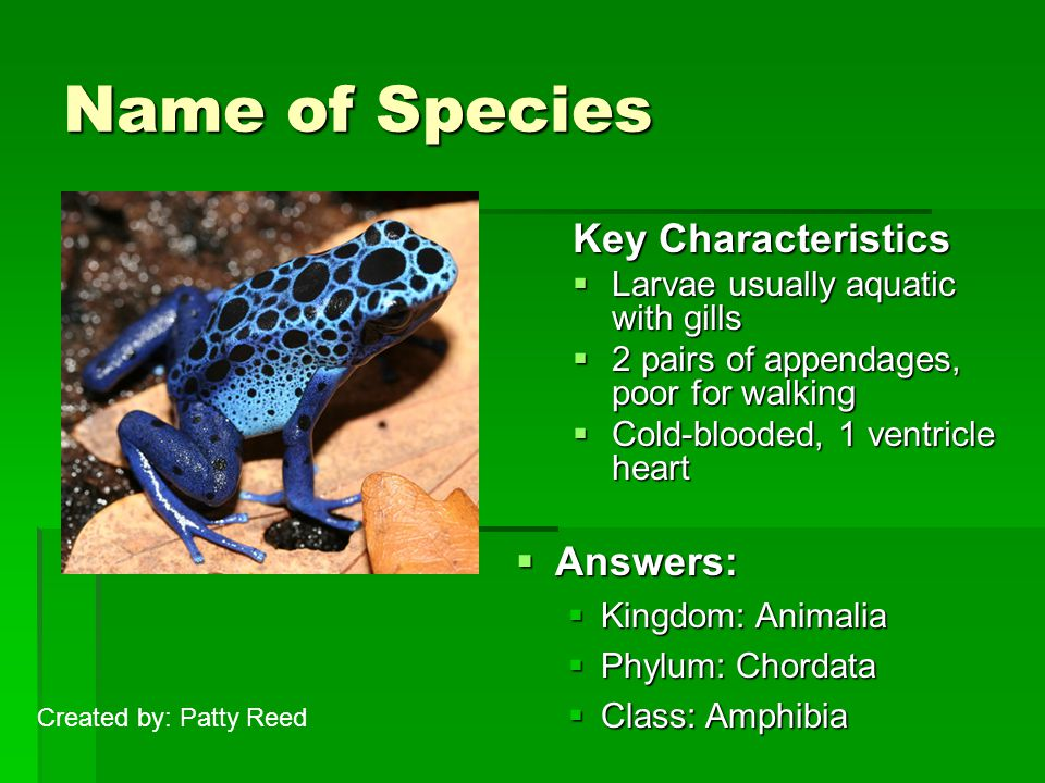 Name of Species Key Characteristics  Larvae usually aquatic with gills  2 pairs of appendages, poor for walking  Cold-blooded, 1 ventricle heart  Answers:  Kingdom: Animalia  Phylum: Chordata  Class: Amphibia Created by: Patty Reed