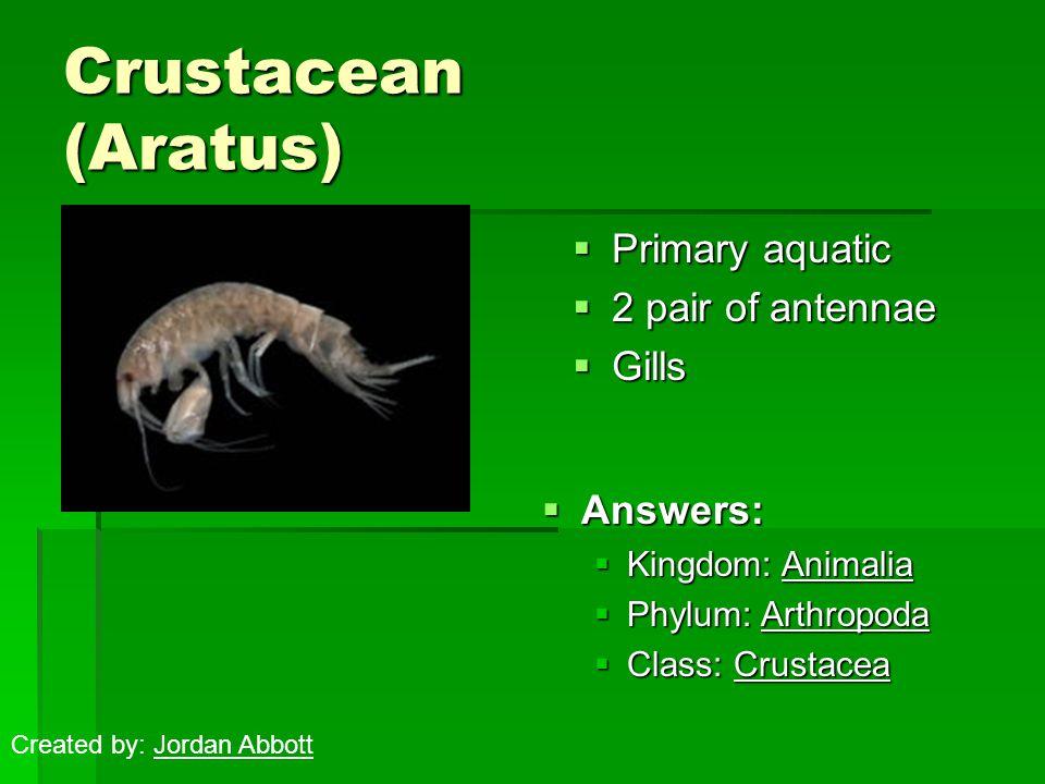 Crustacean (Aratus)  Primary aquatic  2 pair of antennae  Gills  Answers:  Kingdom: Animalia  Phylum: Arthropoda  Class: Crustacea Created by: Jordan Abbott