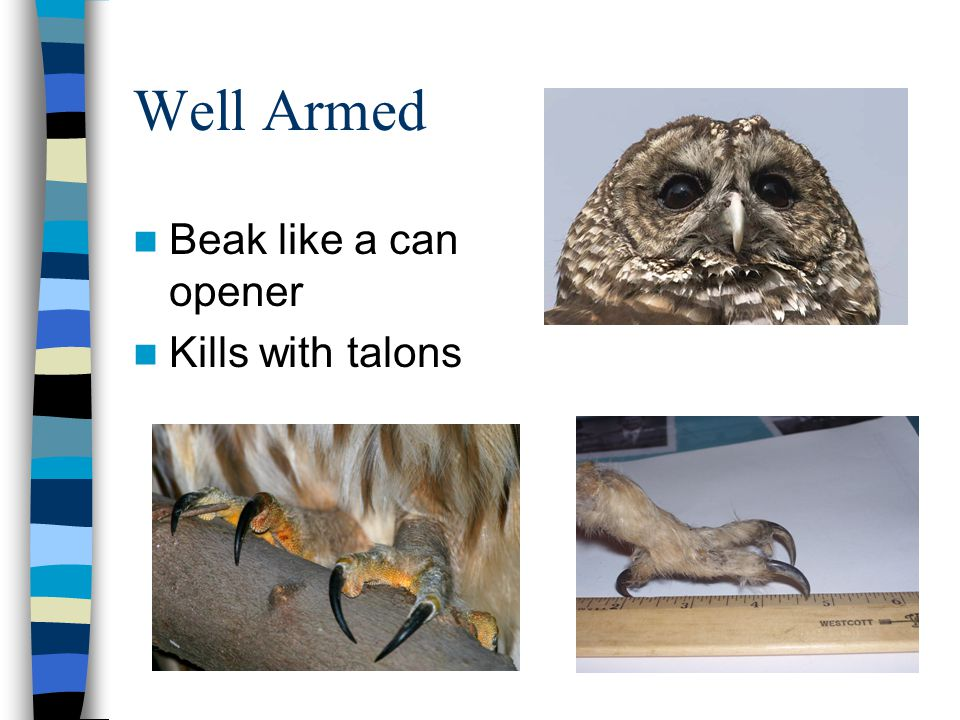 Well Armed Beak like a can opener Kills with talons