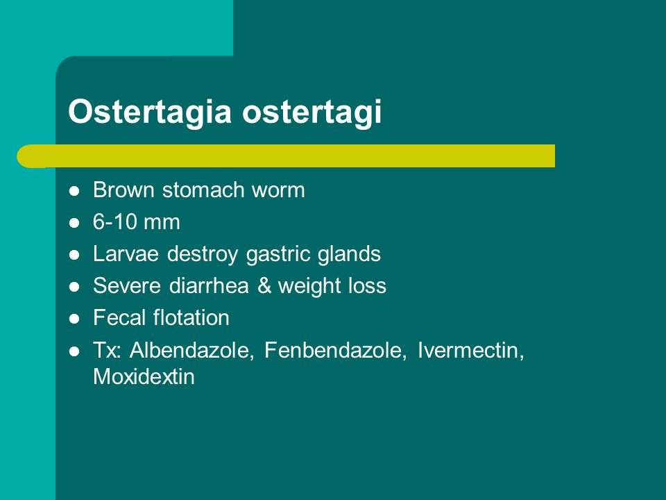 Ostertagia ostertagi Brown stomach worm 6-10 mm Larvae destroy gastric glands Severe diarrhea & weight loss Fecal flotation Tx: Albendazole, Fenbendaz