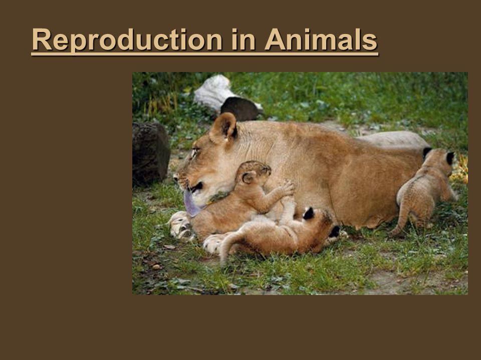 Brainstorm Brainstorm 1)Do all animals reproduce similarly.