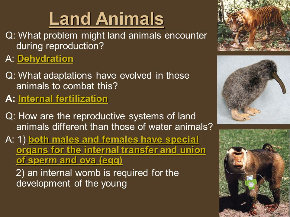 What are the different forms of Reproduction.