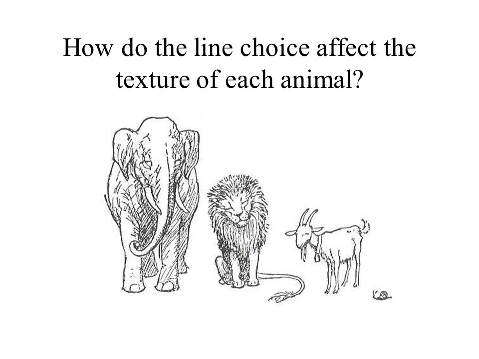 How do the line choice affect the texture of each animal