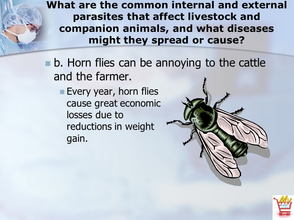 What are the common internal and external parasites that affect livestock and companion animals, and what diseases might they spread or cause.