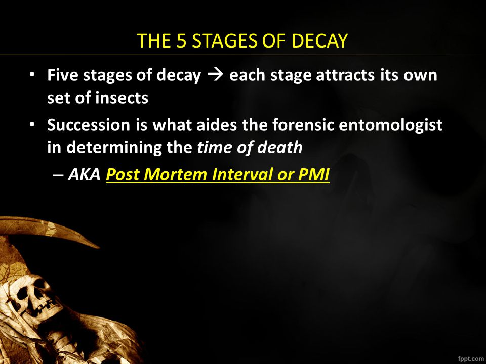 THE 5 STAGES OF DECAY Five stages of decay  each stage attracts its own set of insects Succession is what aides the forensic entomologist in determin