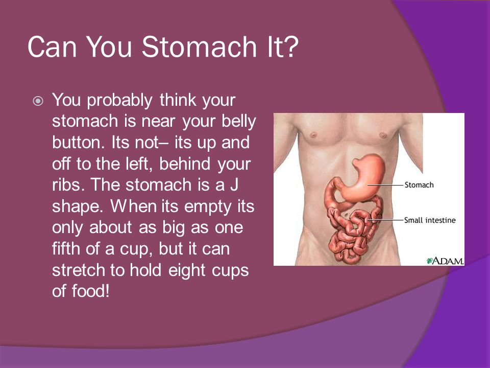Yum  As your stomach churns, it mixes your meal with stomach acids that help break down the food.
