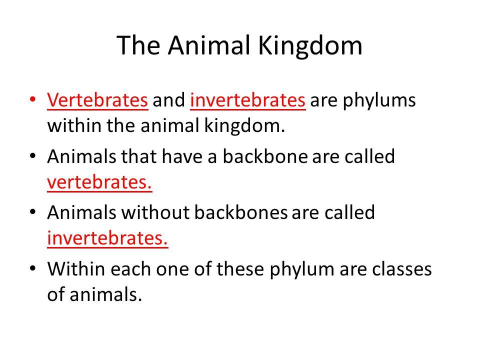 The Animal Kingdom Vertebrates and invertebrates are phylums within the animal kingdom.