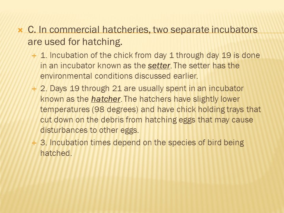  C.In commercial hatcheries, two separate incubators are used for hatching.
