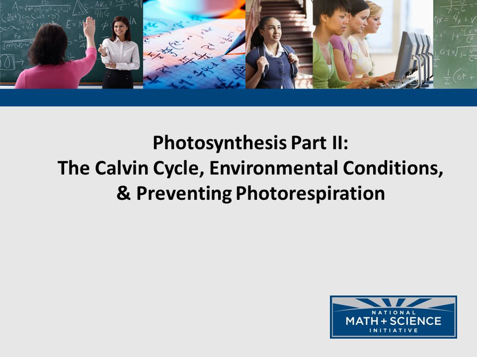 Photosynthesis Part II: The Calvin Cycle, Environmental Conditions, & Preventing Photorespiration