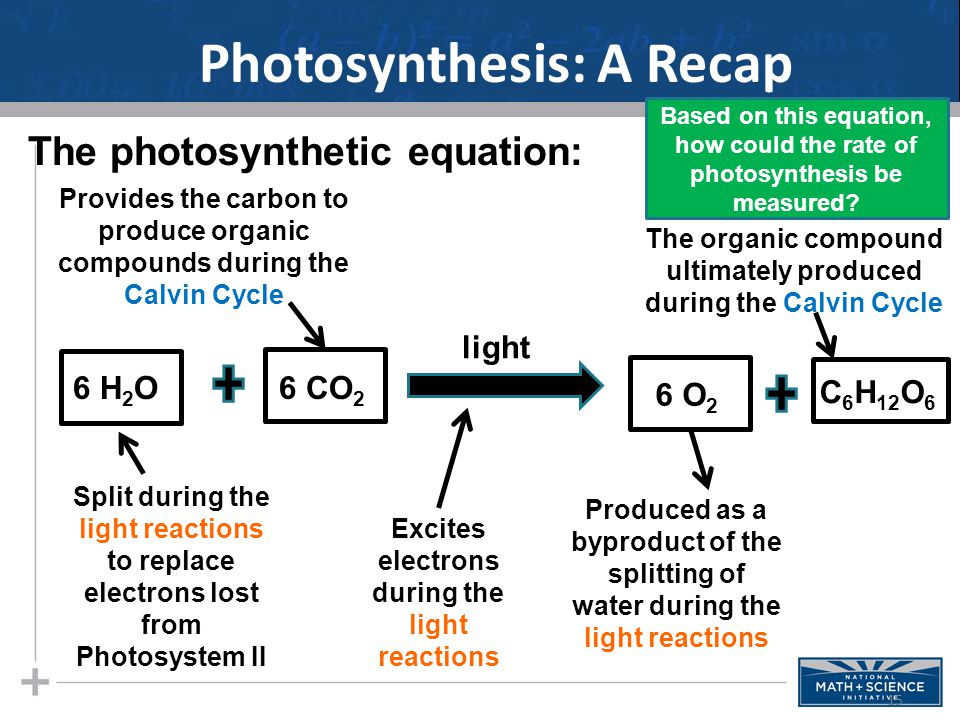 Photosynthesis: A Recap 15 Based on this equation, how could the rate of photosynthesis be measured.