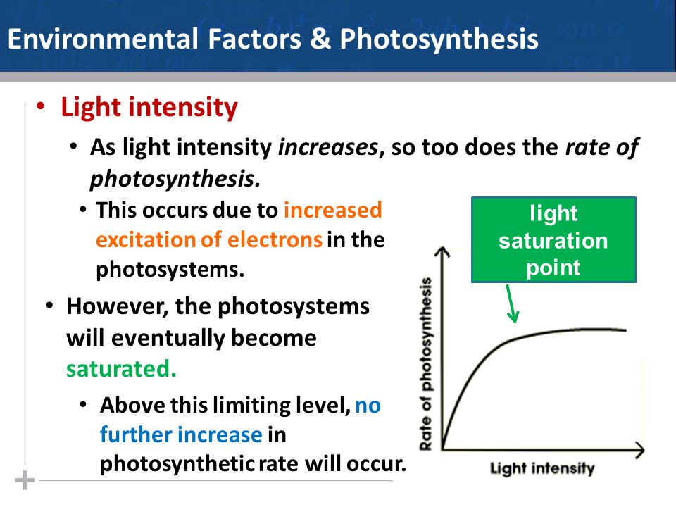 Environmental Factors & Photosynthesis Light intensity As light intensity increases, so too does the rate of photosynthesis.