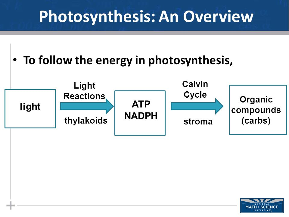 Photosynthesis: An Overview To follow the energy in photosynthesis, 3 light ATP NADPH Light Reactions thylakoids Calvin Cycle stroma Organic compounds (carbs)
