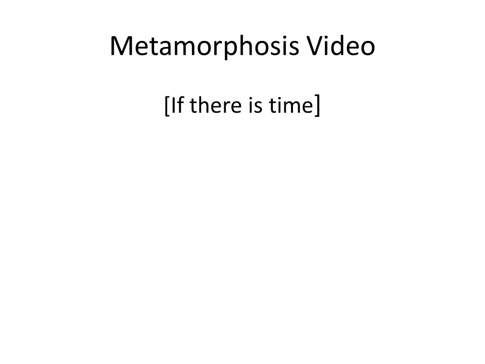 Metamorphosis Video [If there is time ]