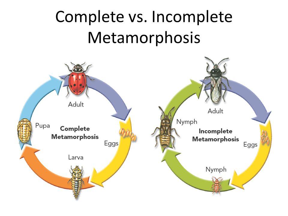 Complete vs. Incomplete Metamorphosis