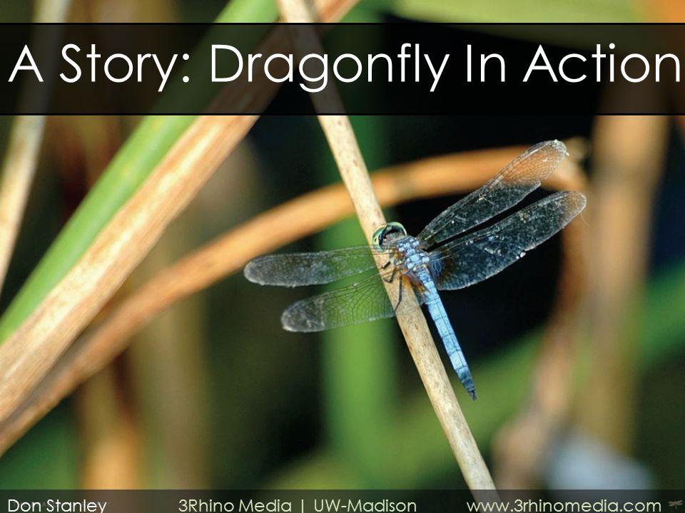 Don Stanley 3Rhino Media | UW-Madison www.3rhinomedia.com A Story: Dragonfly In Action