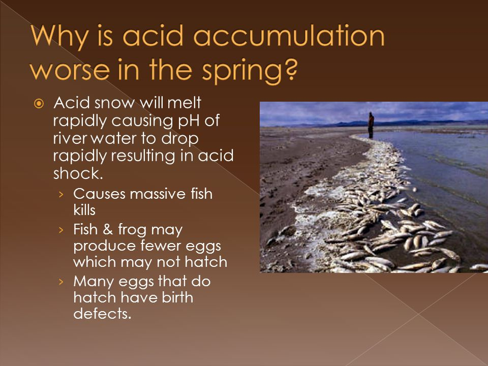 Acid snow will melt rapidly causing pH of river water to drop rapidly resulting in acid shock.